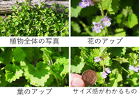 植物写真の例